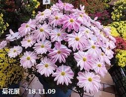 f:id:mikawakinta63:20181113152653j:image:right