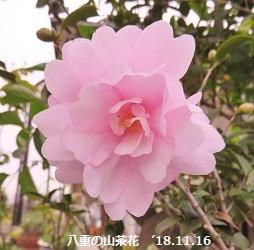 f:id:mikawakinta63:20181116160409j:image:left