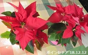 f:id:mikawakinta63:20181212135053j:image:right