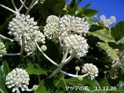 f:id:mikawakinta63:20181213171321j:image