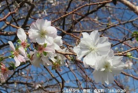 f:id:mikawakinta63:20181214125826j:image