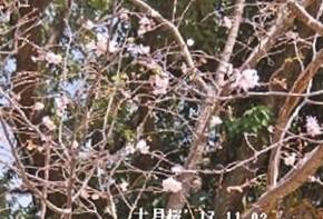f:id:mikawakinta63:20181214132234j:image:right