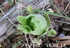 f:id:mikawakinta63:20190117202842j:image:right