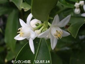 f:id:mikawakinta63:20190128145058j:image:left
