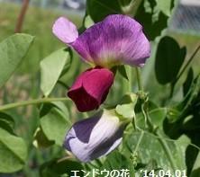 f:id:mikawakinta63:20190128162055j:image:left