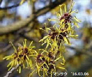 f:id:mikawakinta63:20190212130026p:plain