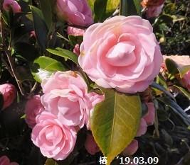 f:id:mikawakinta63:20190312141536j:plain