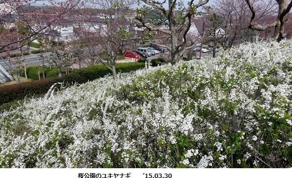 f:id:mikawakinta63:20190313124622j:plain
