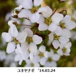 f:id:mikawakinta63:20190313133411j:plain