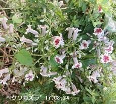 f:id:mikawakinta63:20190313145103j:plain