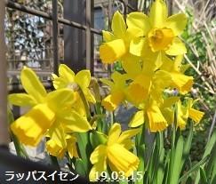 f:id:mikawakinta63:20190315152901j:plain