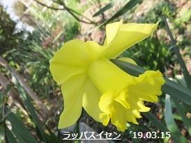 f:id:mikawakinta63:20190315152922j:plain