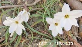 f:id:mikawakinta63:20190318155239j:plain