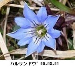 f:id:mikawakinta63:20190318155553j:plain