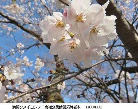 f:id:mikawakinta63:20190401141016j:plain