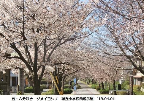 f:id:mikawakinta63:20190402151708j:plain