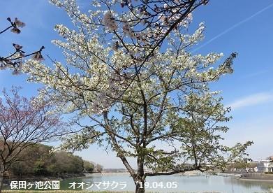 f:id:mikawakinta63:20190405173537j:plain