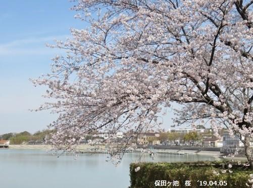 f:id:mikawakinta63:20190405173808j:plain