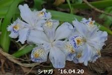 f:id:mikawakinta63:20190412150411j:plain