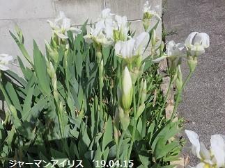 f:id:mikawakinta63:20190416141504j:plain