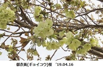 f:id:mikawakinta63:20190417132842j:plain