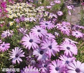 f:id:mikawakinta63:20190422161919j:plain