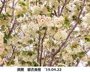 f:id:mikawakinta63:20190423142642j:plain