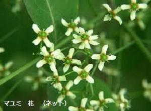 f:id:mikawakinta63:20190423145232p:plain