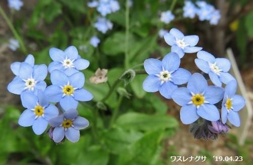 f:id:mikawakinta63:20190424125439j:plain
