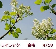 f:id:mikawakinta63:20190425133956j:plain
