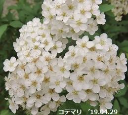 f:id:mikawakinta63:20190429172829j:plain
