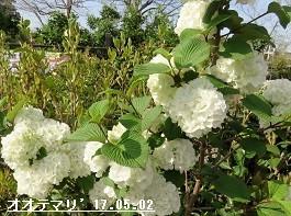 f:id:mikawakinta63:20190429172856j:plain