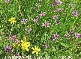 f:id:mikawakinta63:20190508191812j:plain
