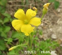 f:id:mikawakinta63:20190508191835j:plain
