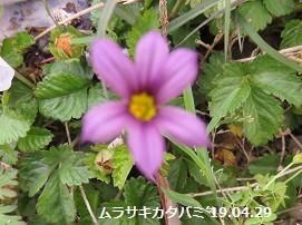 f:id:mikawakinta63:20190508191857j:plain