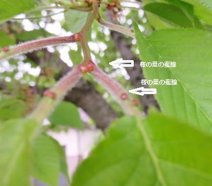 f:id:mikawakinta63:20190510175121j:plain