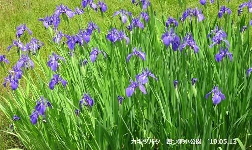 f:id:mikawakinta63:20190513154237j:plain