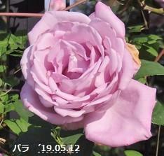 f:id:mikawakinta63:20190514153016j:plain