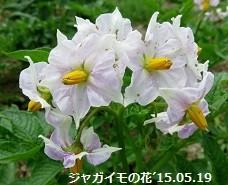 f:id:mikawakinta63:20190517145529j:plain