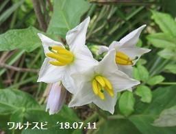 f:id:mikawakinta63:20190517145548j:plain