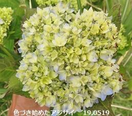 f:id:mikawakinta63:20190520183814j:plain
