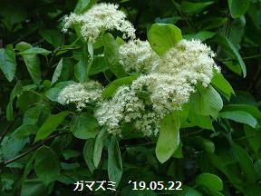 f:id:mikawakinta63:20190522132455p:plain