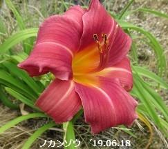f:id:mikawakinta63:20190624135011j:plain