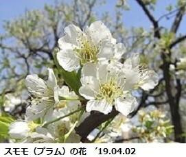 f:id:mikawakinta63:20190626133004j:plain