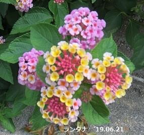 f:id:mikawakinta63:20190626140853j:plain