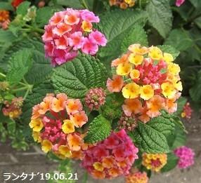f:id:mikawakinta63:20190626140910j:plain
