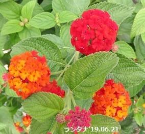 f:id:mikawakinta63:20190701135643j:plain