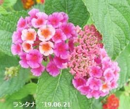 f:id:mikawakinta63:20190701135705j:plain