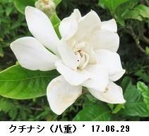f:id:mikawakinta63:20190701155220j:plain
