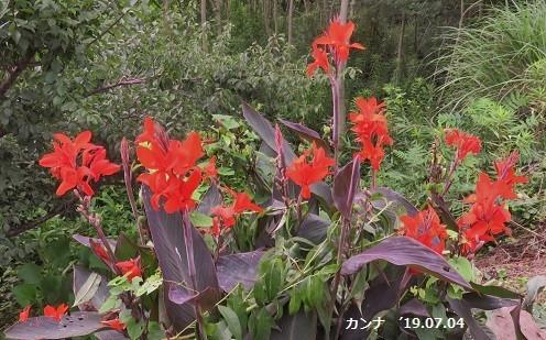 f:id:mikawakinta63:20190705131826j:plain